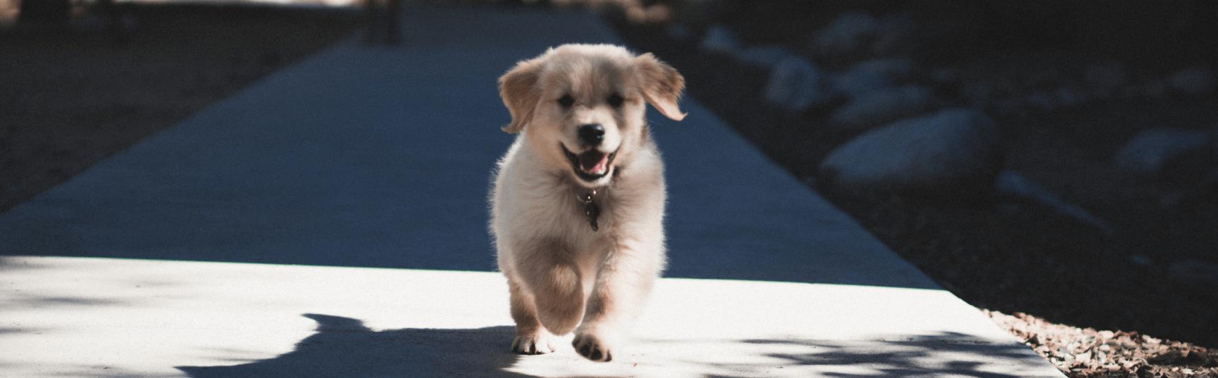 Ką reikia žinoti perkant šuniuką