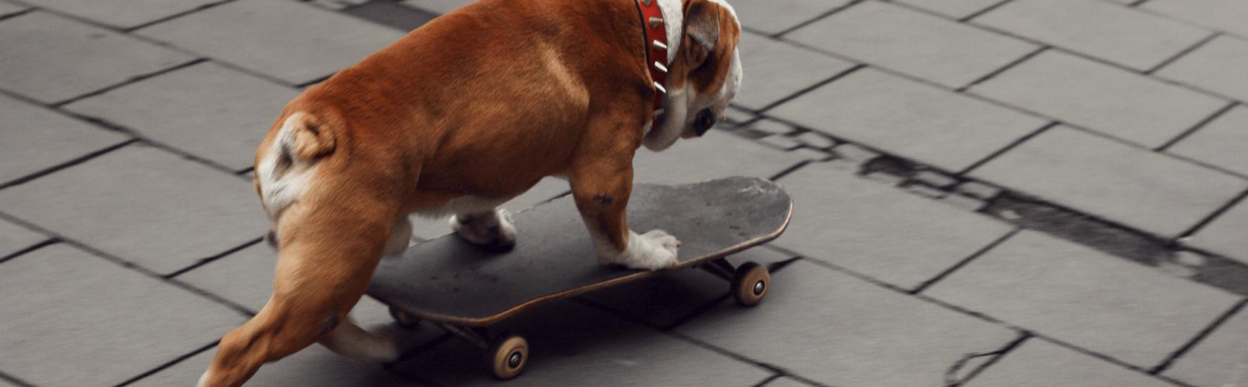 7 idėjos, kaip vasarą sportuoti su šunimi